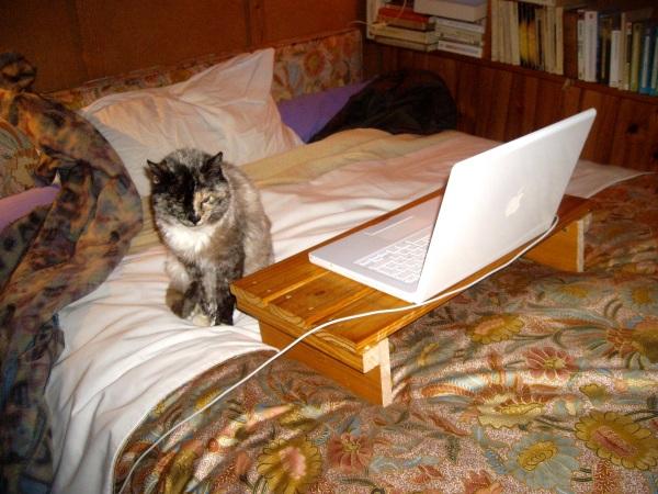 chatte et macbook